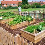 Plánování zahrady na rok 2020